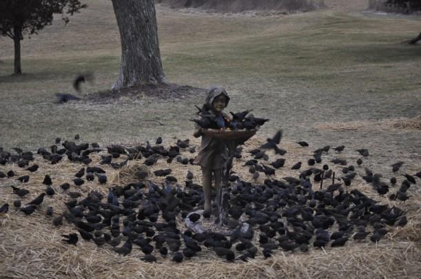 visiting black birds