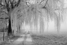 winter_willow_by_la_vita_a_bella